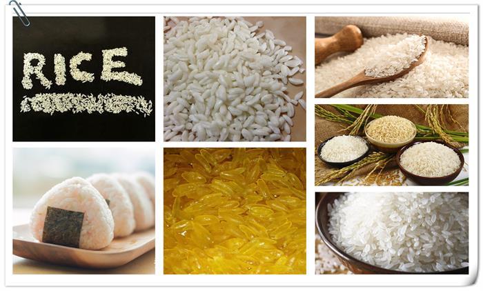 Aritificial Rice Processing Line